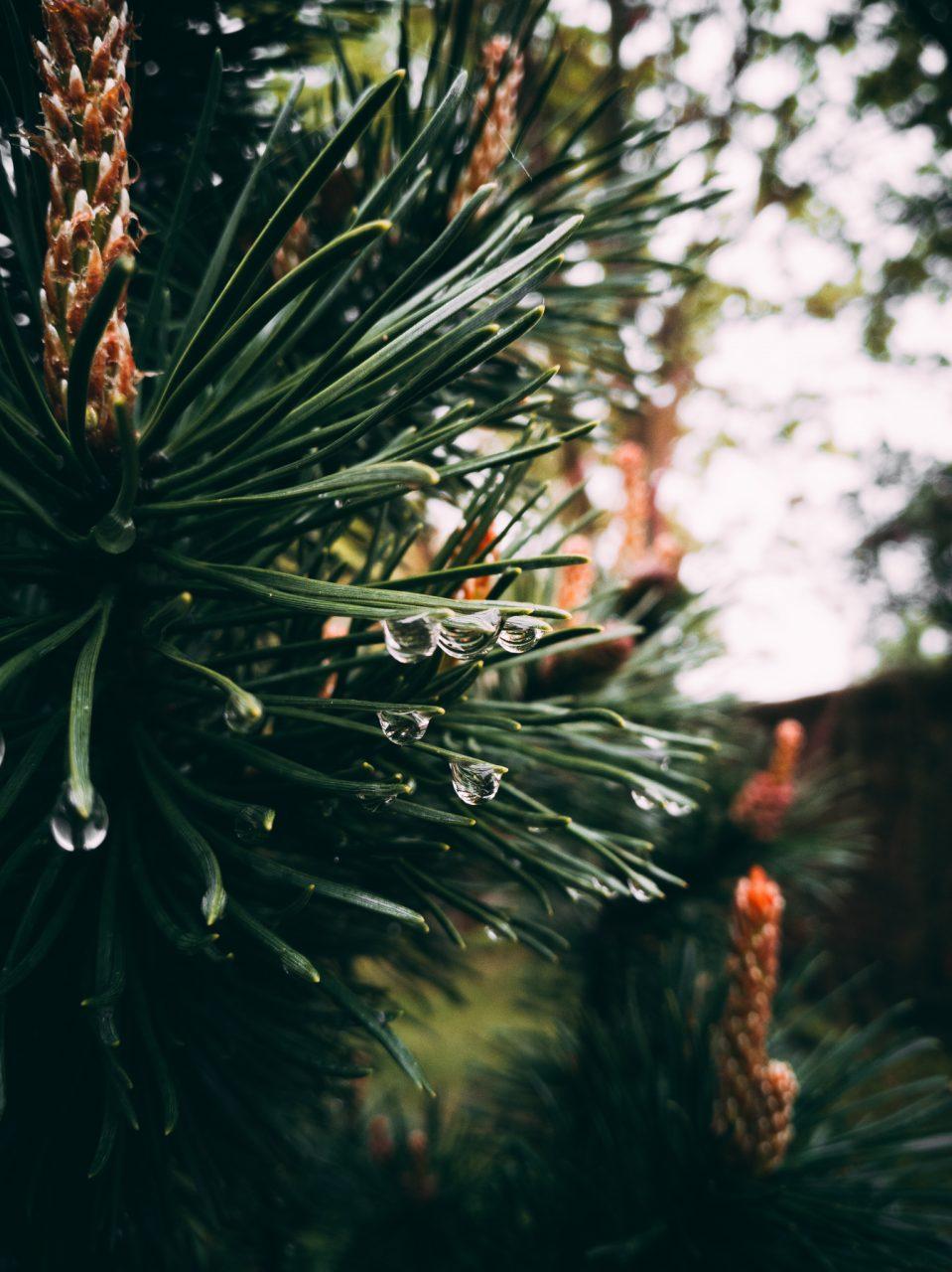 """Tag 273 - Regentropfen // """"Sonnenschein ist köstlich, Regen erfrischt, Wind kräftigt, Schnee erheitert. Es gibt kein schlechtes Wetter, es gibt nur verschiedene Arten von gutem."""" - John Ruskin"""