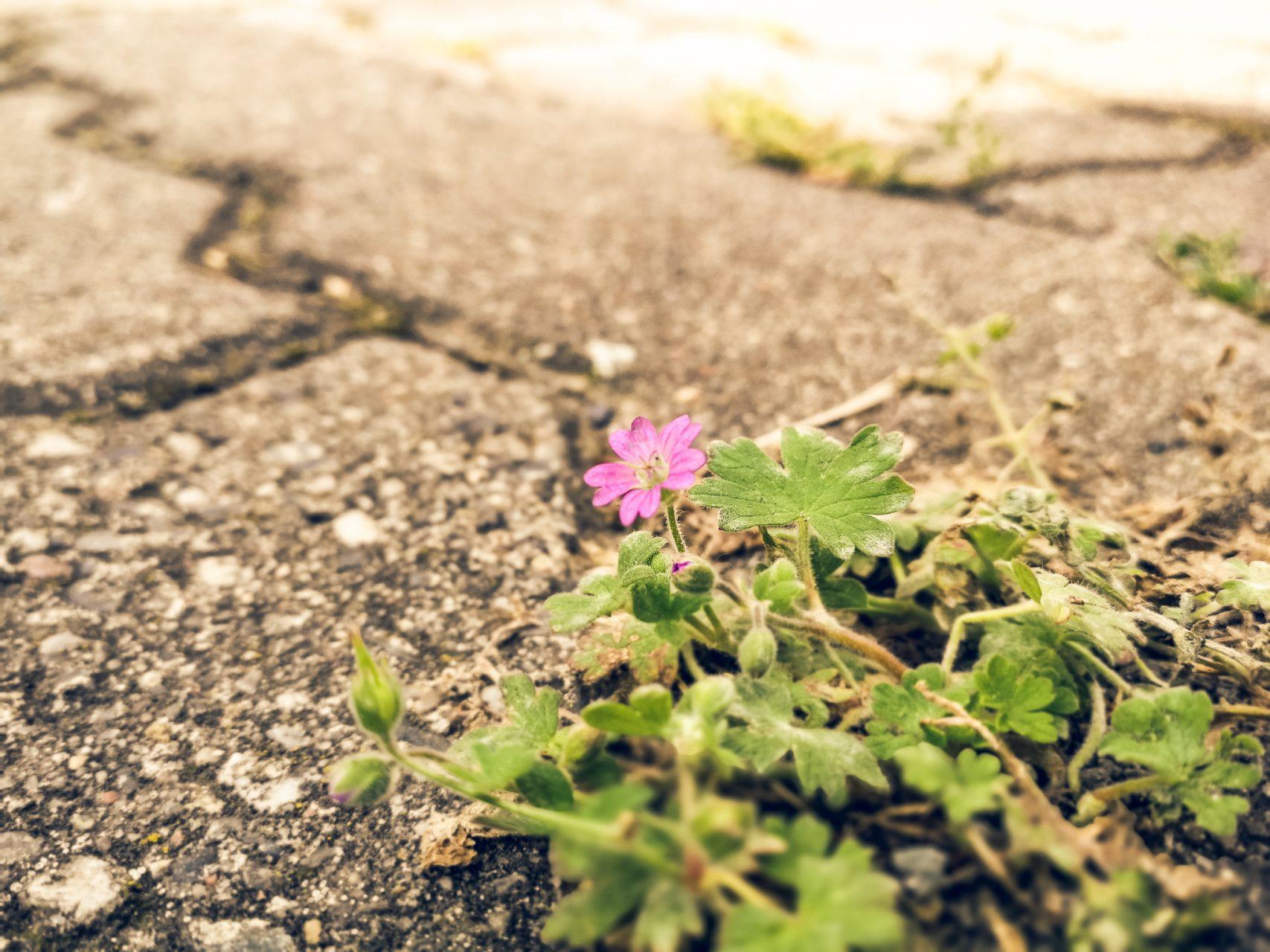 """Tag 347 - Pflanze // """"Es ist wahr: Die Blumen können uns nicht ernähren, aber sie machen die Freuden des Lebens aus."""" - André Gilde"""